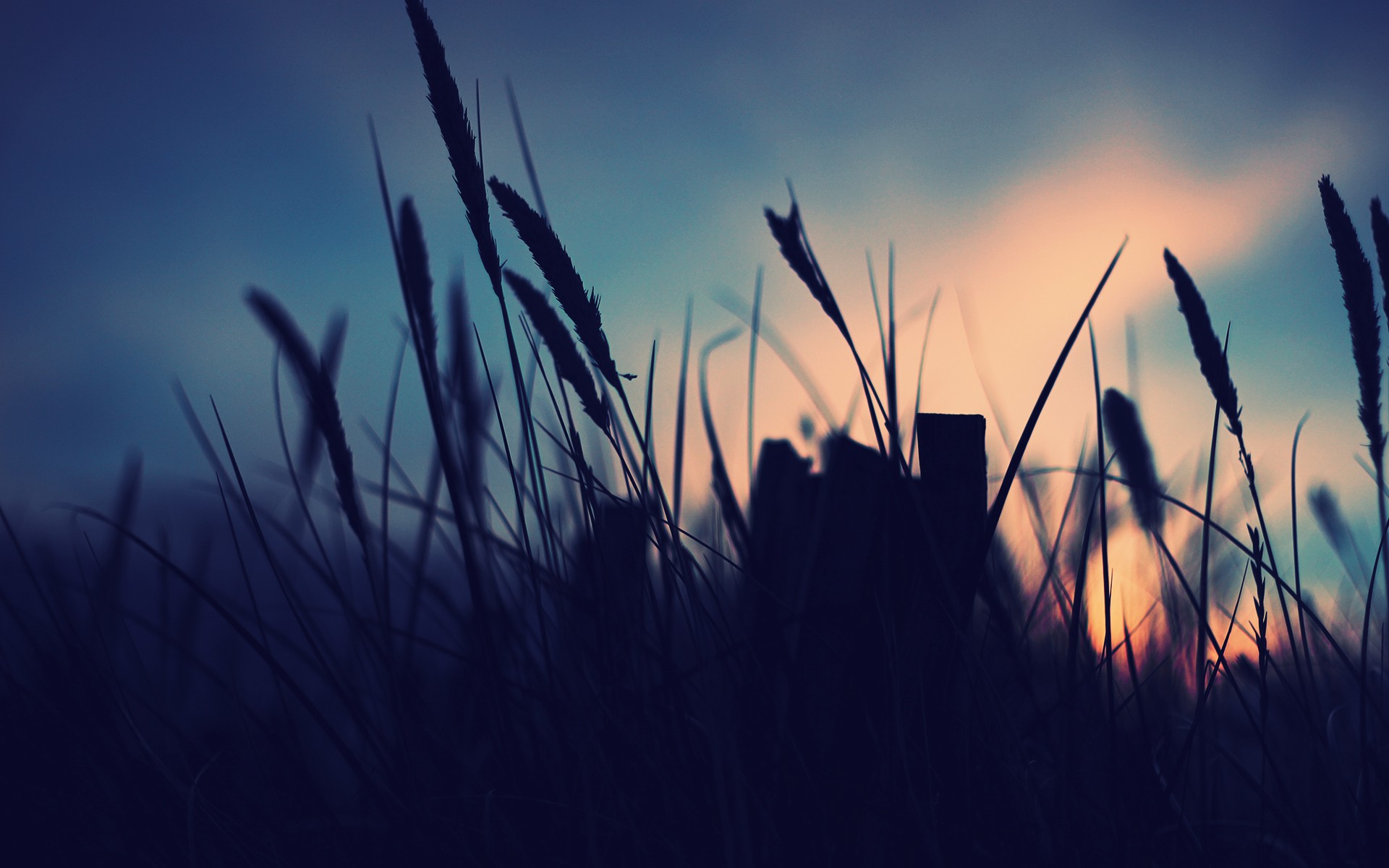 трава сумерки вечер загрузить